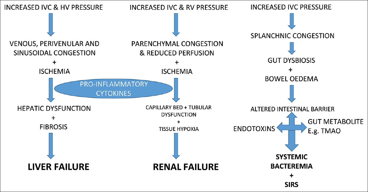 Figure 1: Pathological changes in Liver, Kidney and Gut in RV Failure. IVC: Inferior vena cava, HV: Hepatic vein, RV: Renal vein, TAMO: Trimethylamine N-oxide, SIRS: Systemic inflammatory response syndrome